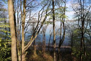 Begräbniswald-Küstenfrieden-in-der-Eckernförder-Bucht-Eckernförde